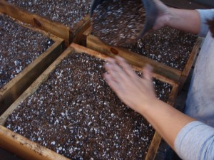 Photo of a hand planting seeds in plant boxes.