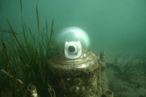 Photo showing fish webcam underwater at the Huntington Beach Wetlands.