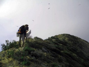 Scientists carry nest boxes for installation on islands to encourage seabird nesting.
